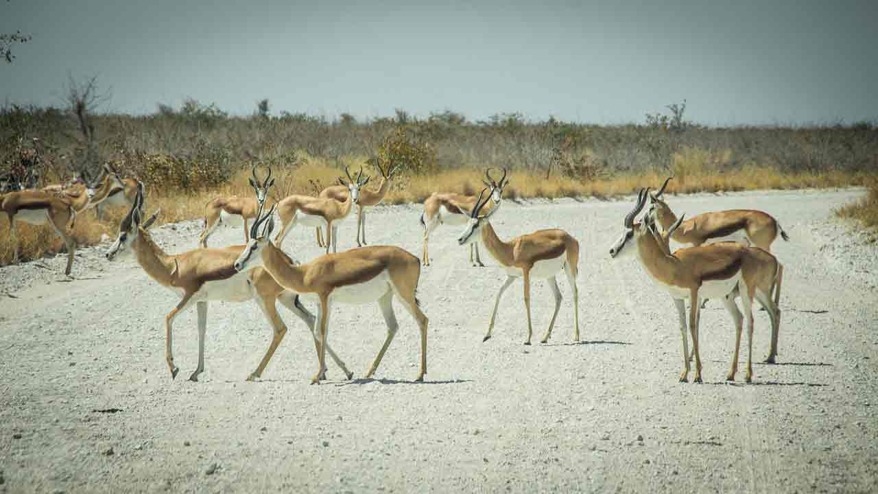 namibia facts interesting facts about namibia namibia history facts fun facts about namibia dune 7 namibia facts namibia facts and information namibia facts for kids facts about namibia culture namibia culture facts namibia geography facts