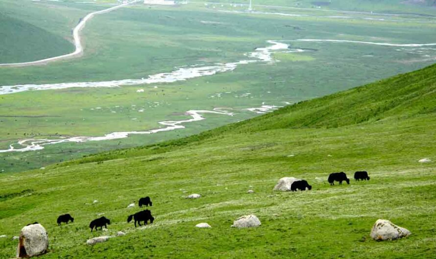 100 Plateau of Tibet Facts to Astonish You