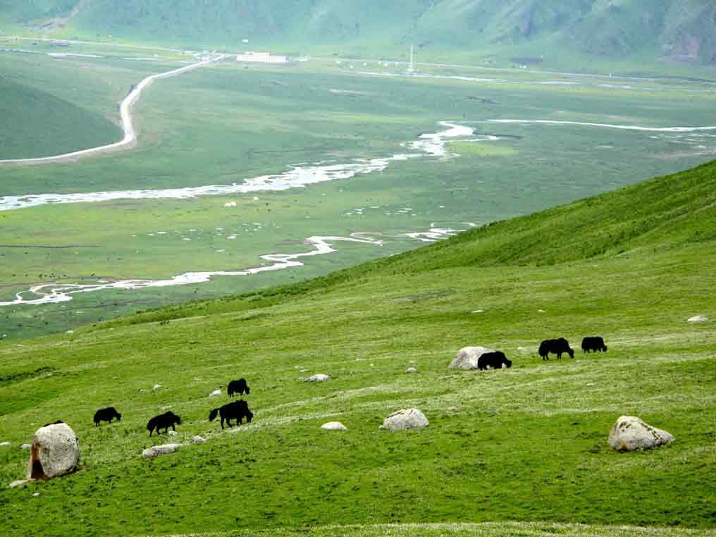 tibet facts plateau of tibet facts tibet fun facts facts about the plateau of tibet tibet interesting facts