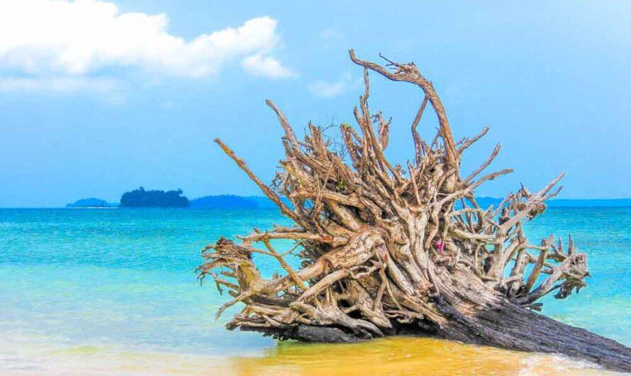29 Andaman and Nicobar Islands Interesting Fun Facts